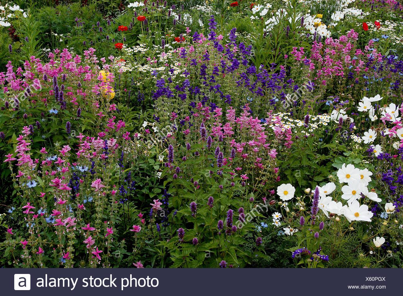 Letto di fiori con cosmea muschio malva cumino nero verniciato e