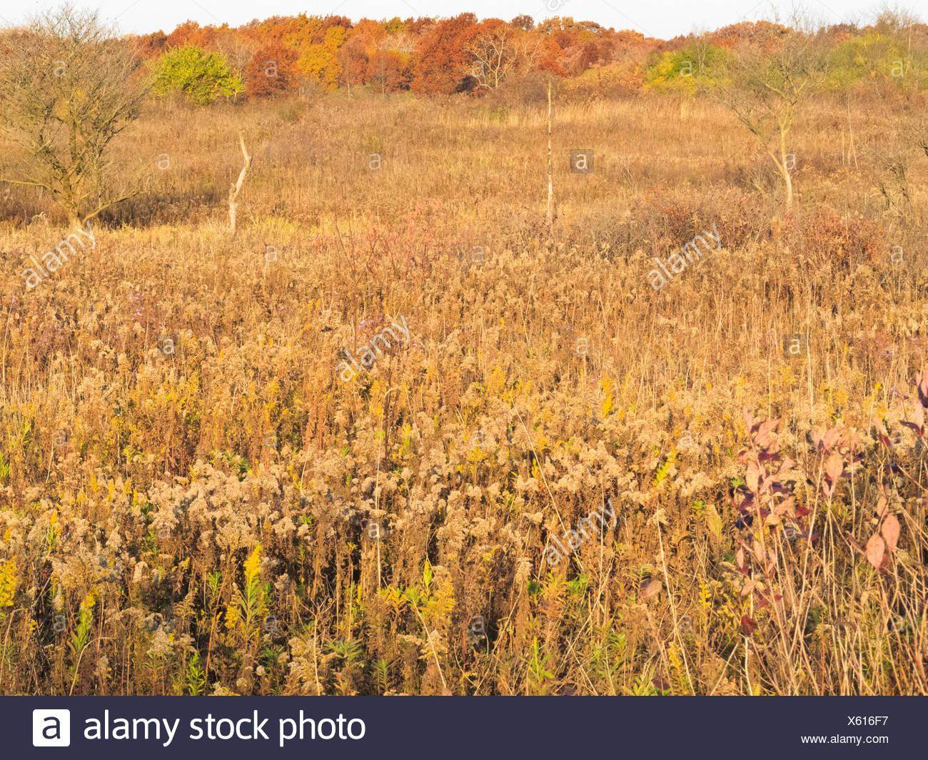 Stati Uniti d'America, Illinois, DuPage County, Darien, prateria paesaggio in autunno Immagini Stock