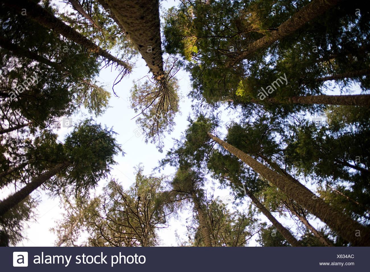 Gli alberi a basso angolo di visione Immagini Stock
