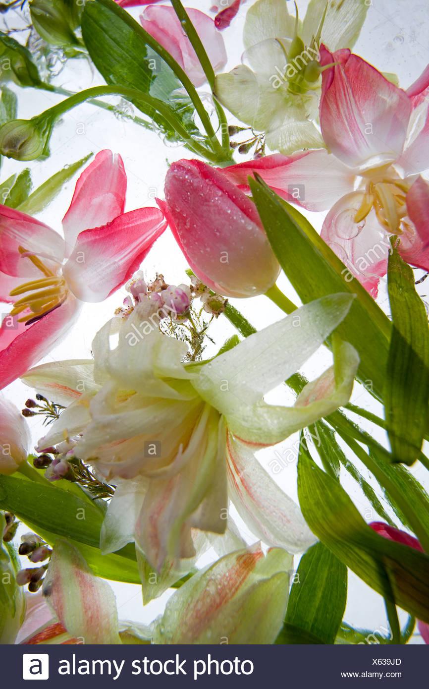Close-up di bellissimi fiori Immagini Stock