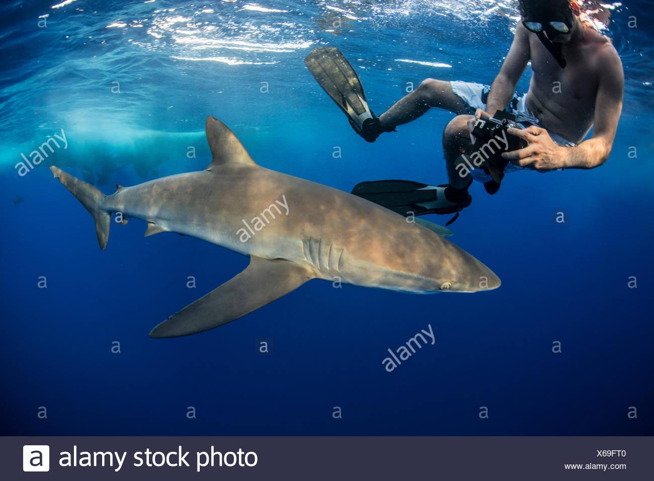 Snorkeler fotografando un squalo seta (Carcharhinus falciformis), Roca Partida, Colima, Messico Immagini Stock