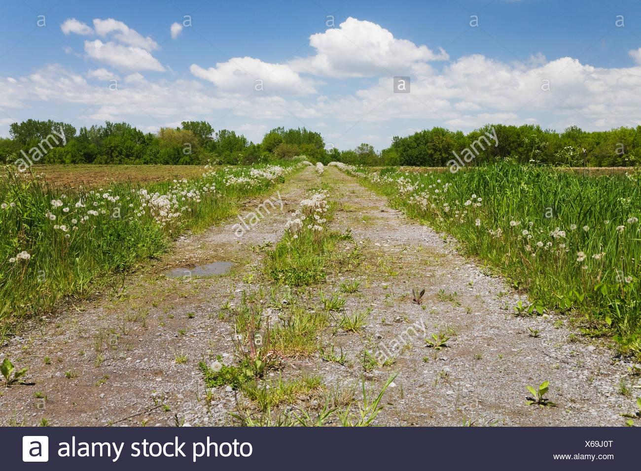 Strada sterrata attraverso un campo agricolo in primavera; Québec Canada Immagini Stock