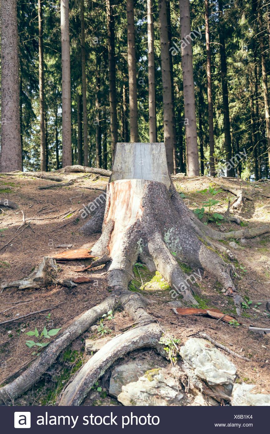 Sedia realizzata di un tronco di albero Foto stock Alamy