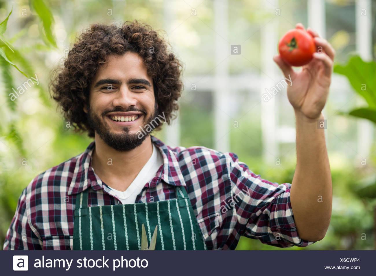 Giardiniere maschio che mostra il pomodoro fresco Immagini Stock