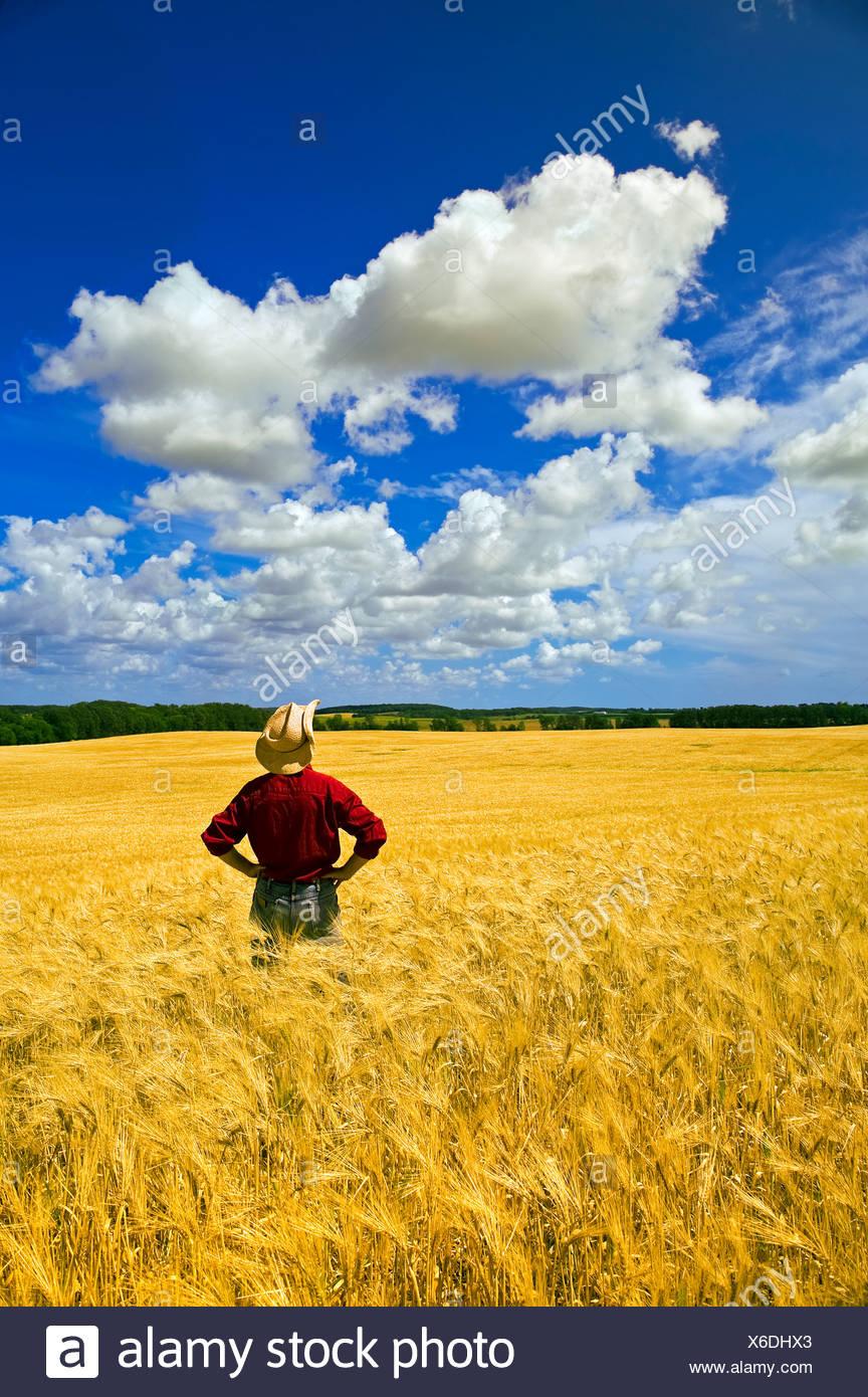 Agricoltura - un agricoltore ispeziona la sua coppia raccolto di orzo con Cumulus clouds overhead / Tiger colline, Manitoba, Canada. Immagini Stock