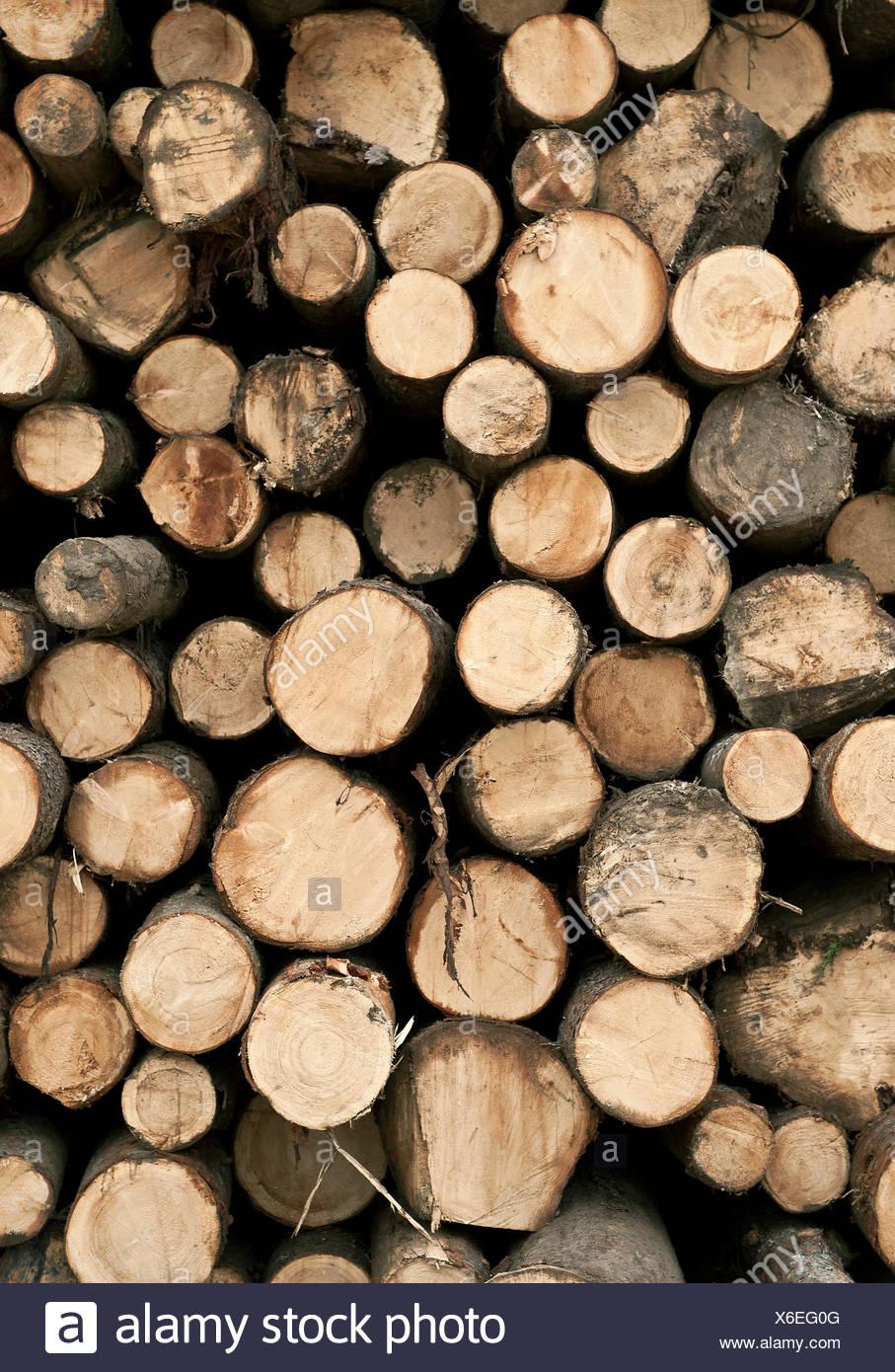 Pile di legname grezzo, Vermont, USA Immagini Stock