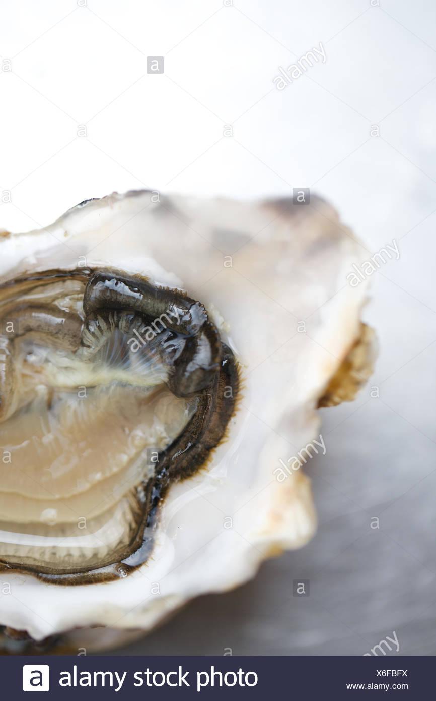 Close up di ostrica fresca. carne, mangiare sano, bevande alimentari, i molluschi e i crostacei. Immagini Stock
