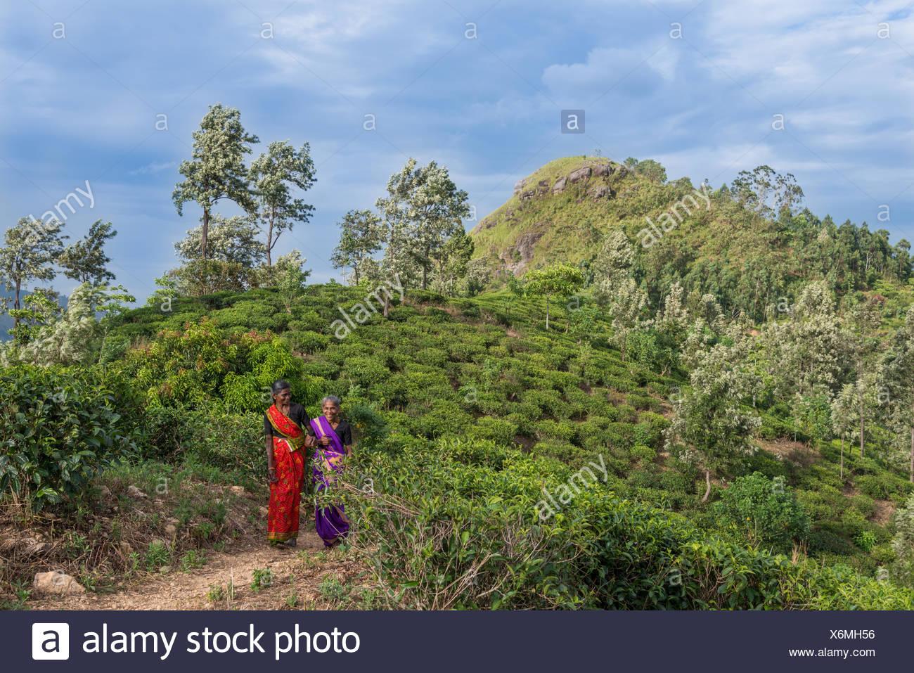 Ritratto di due donne in una piantagione di tè Immagini Stock