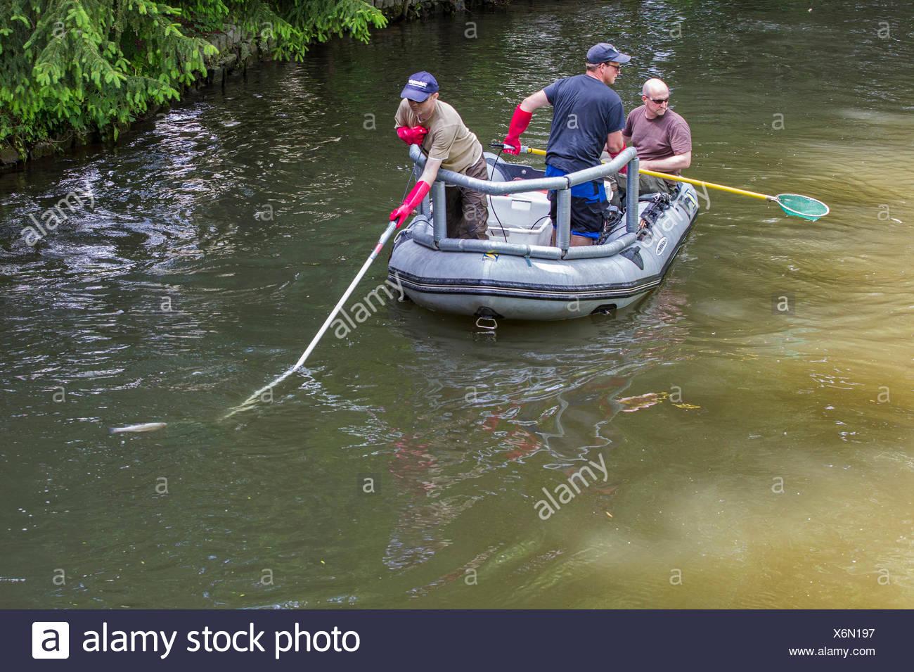 Electrofishing, il controllo del magazzino per la direttiva quadro in materia di acque, in Germania, in Baviera, Fluss Dorfen Immagini Stock