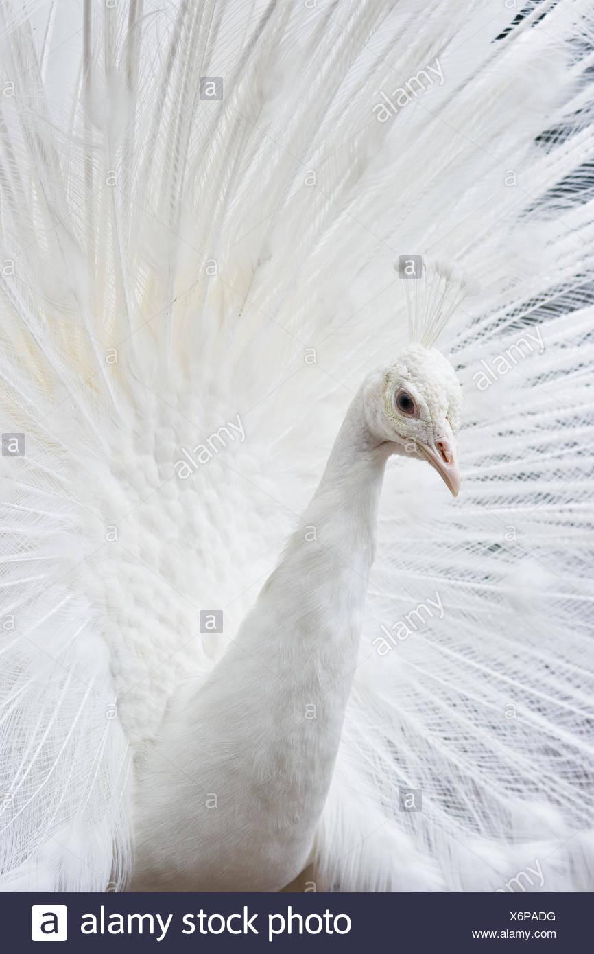 Animali Gli animali di uccelli Immagini Stock