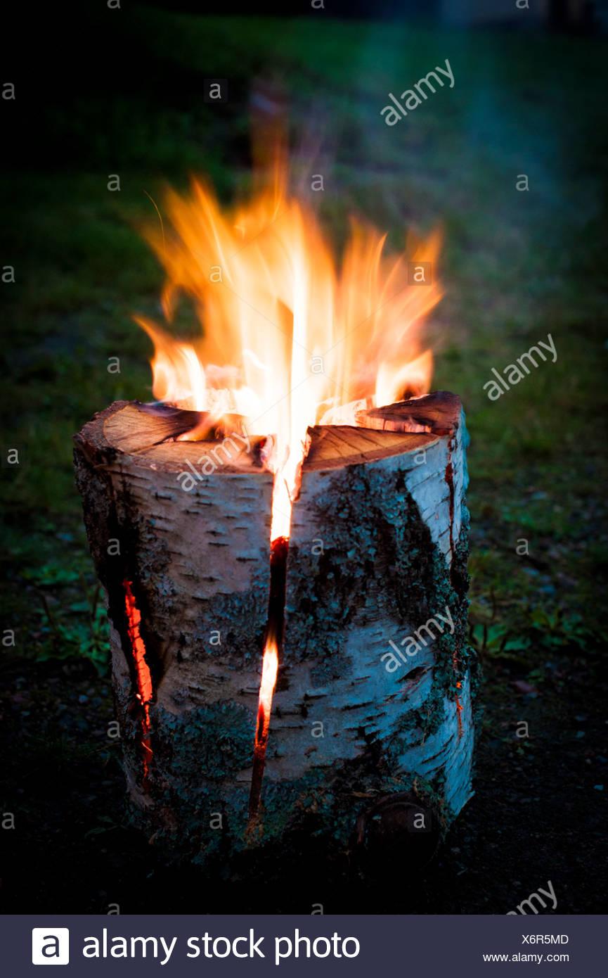 Fuoco che arde nel ceppo di albero all'aperto Immagini Stock