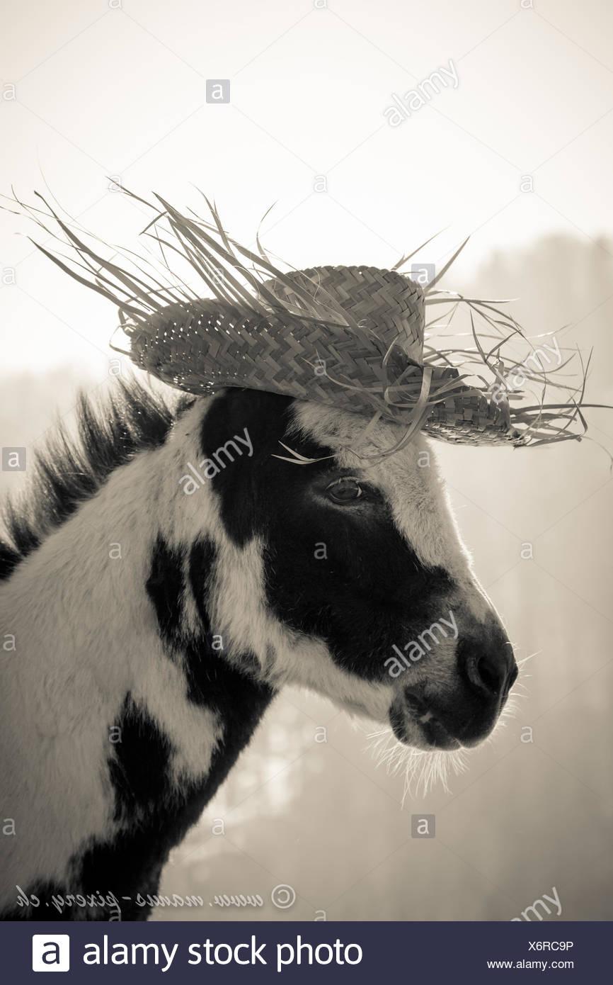 Asino con estate Hat Immagini Stock