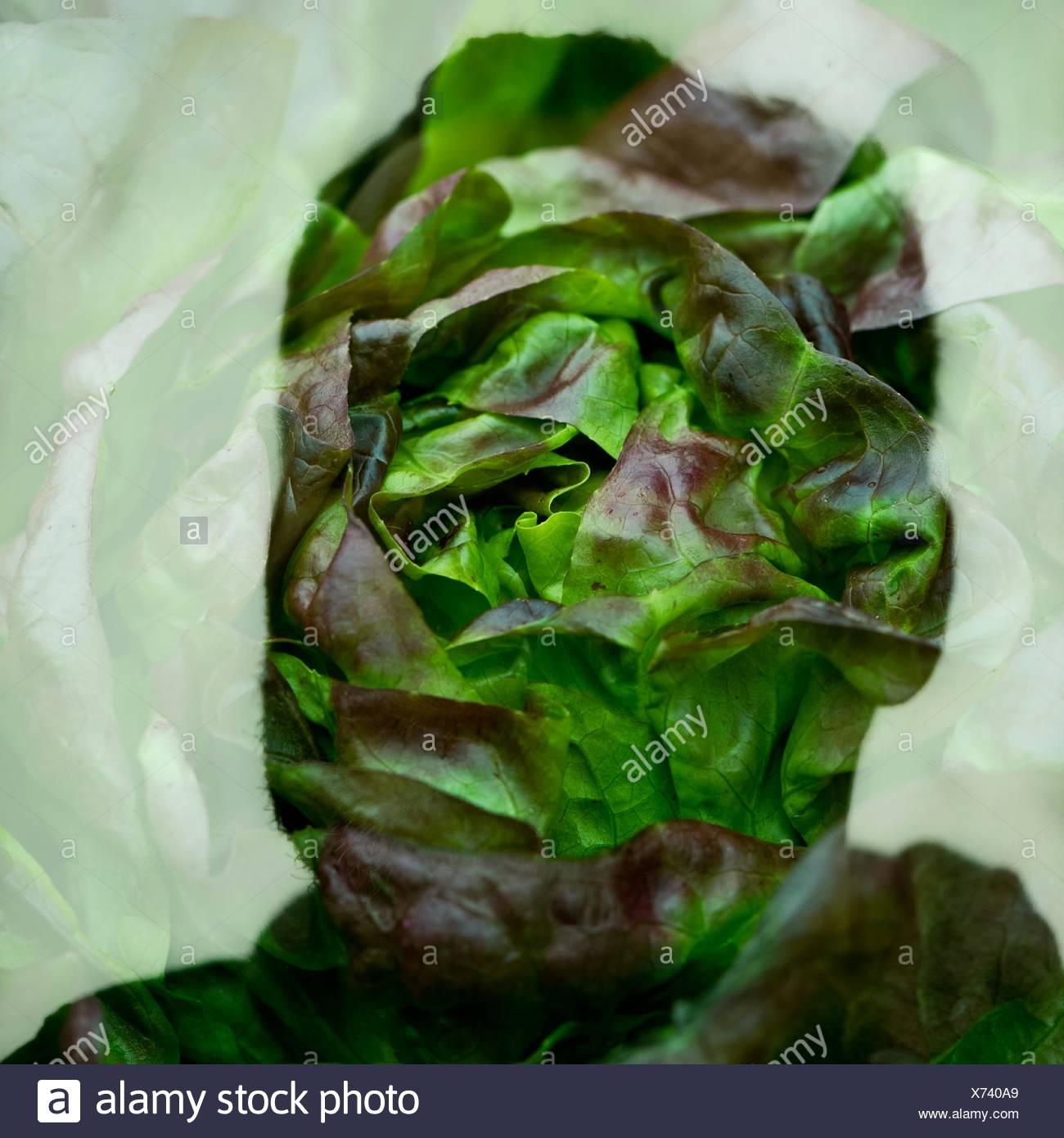Immagine a doppia esposizione di Silhouette Uomo e pianta Immagini Stock