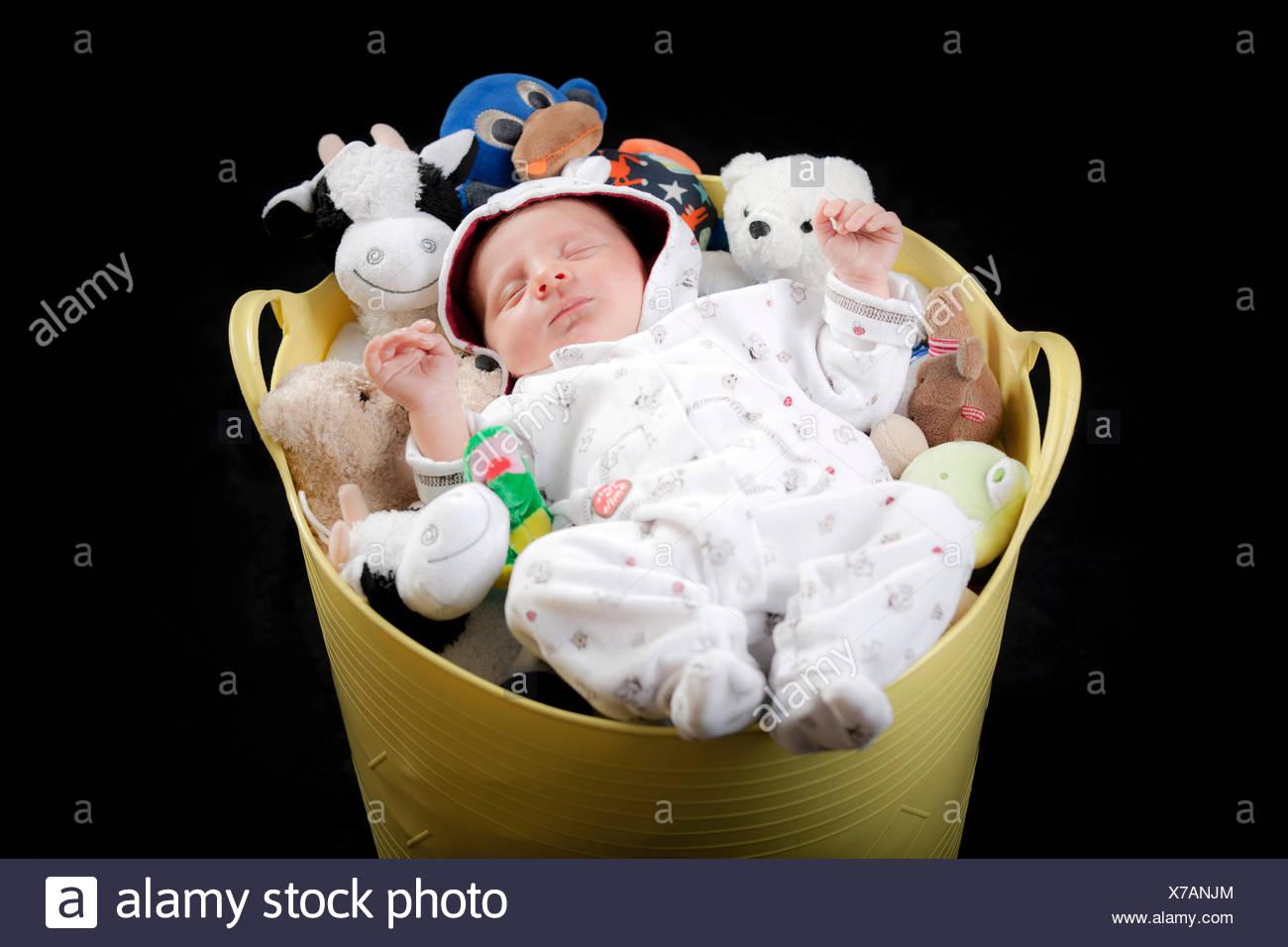 Il bambino dorme in un secchio pieno di animali imbalsamati Immagini Stock