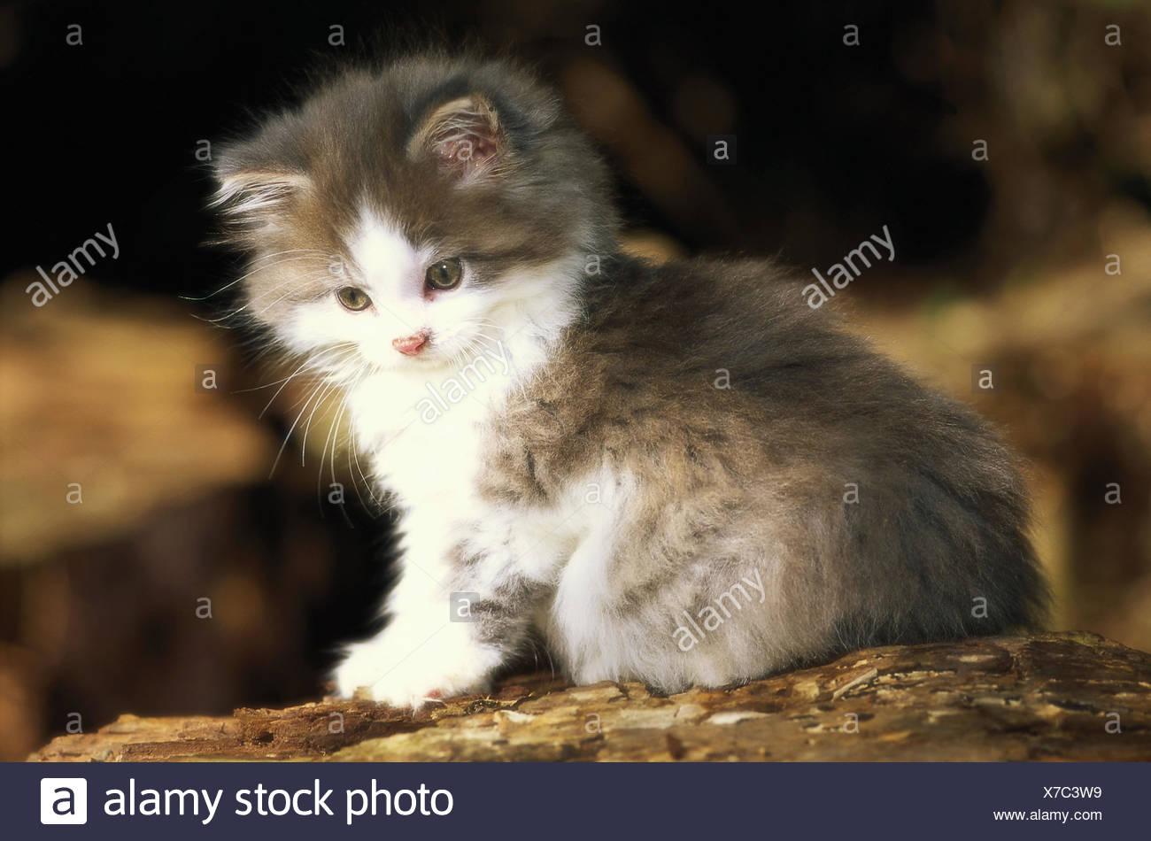 Gatto Razza Gatto A Pelo Lungo Immagini Gatto Razza Gatto A Pelo