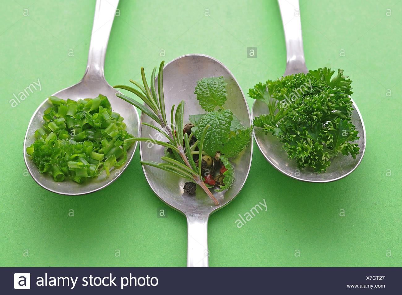 Le erbe aromatiche e le spezie sui vecchi cucchiai di erba cipollina, rosmarino, prezzemolo, pepe, menta Immagini Stock