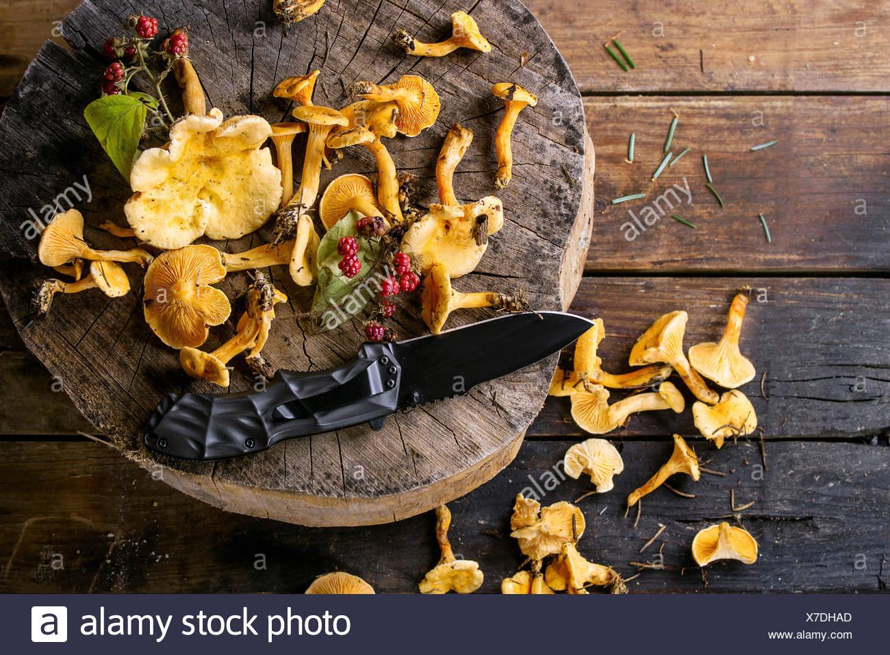 Forest finferli con lamponi selvatici e turist coltello sul moncone di legno sopra il vecchio sfondo di legno. Vista superiore, copia sp Immagini Stock