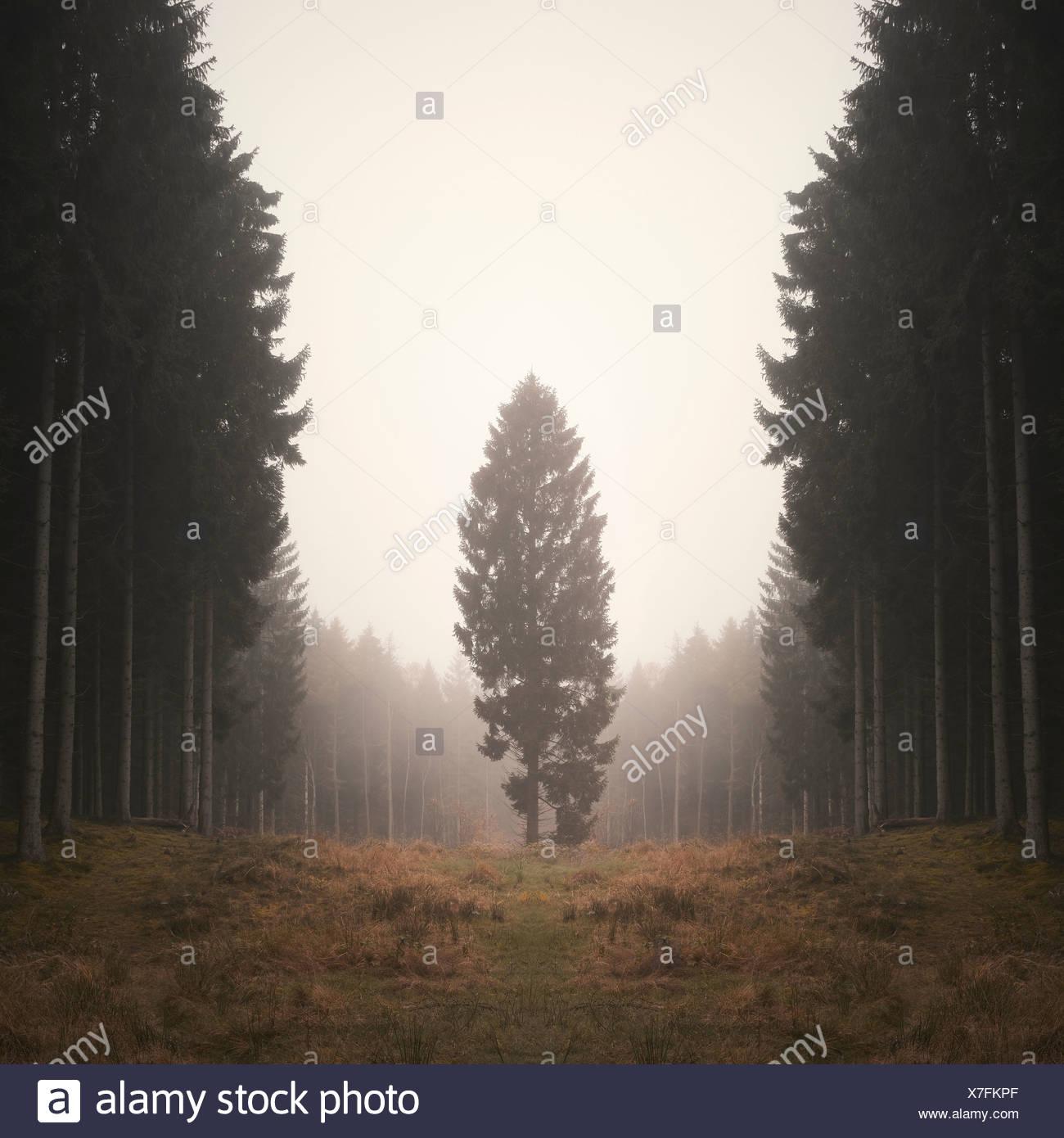 Lone Tree nel Bosco nebbioso Immagini Stock