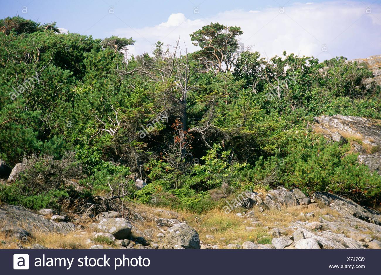 Vista del paesaggio con una flora rigogliosa Immagini Stock