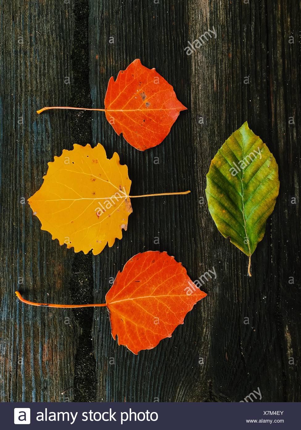 Angolo di Alta Vista di foglie di autunno sul tavolo Immagini Stock