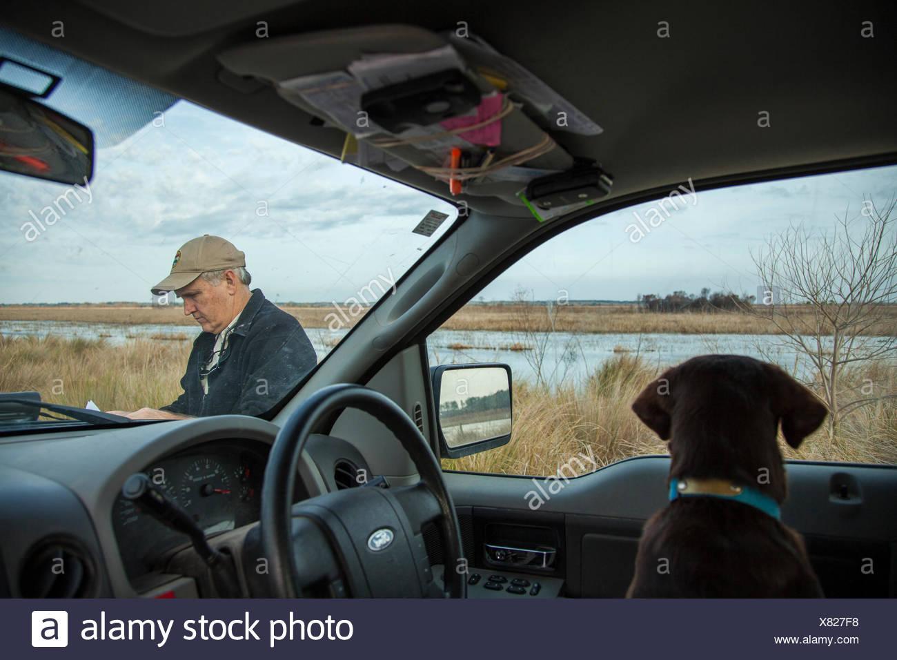 Un Labrador retriever orologi di un dipartimento di Risorse Naturali officer presso l'Orso Island Wildlife Management Area. Immagini Stock