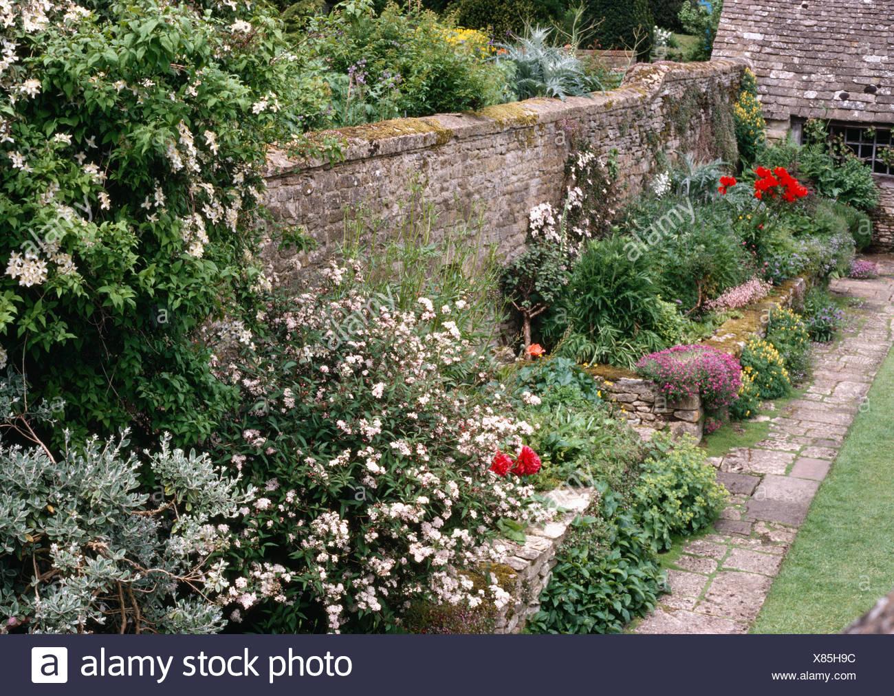 Piante Fiorite Da Giardino Perenni Affordable Diamo Un Nome A Fiori