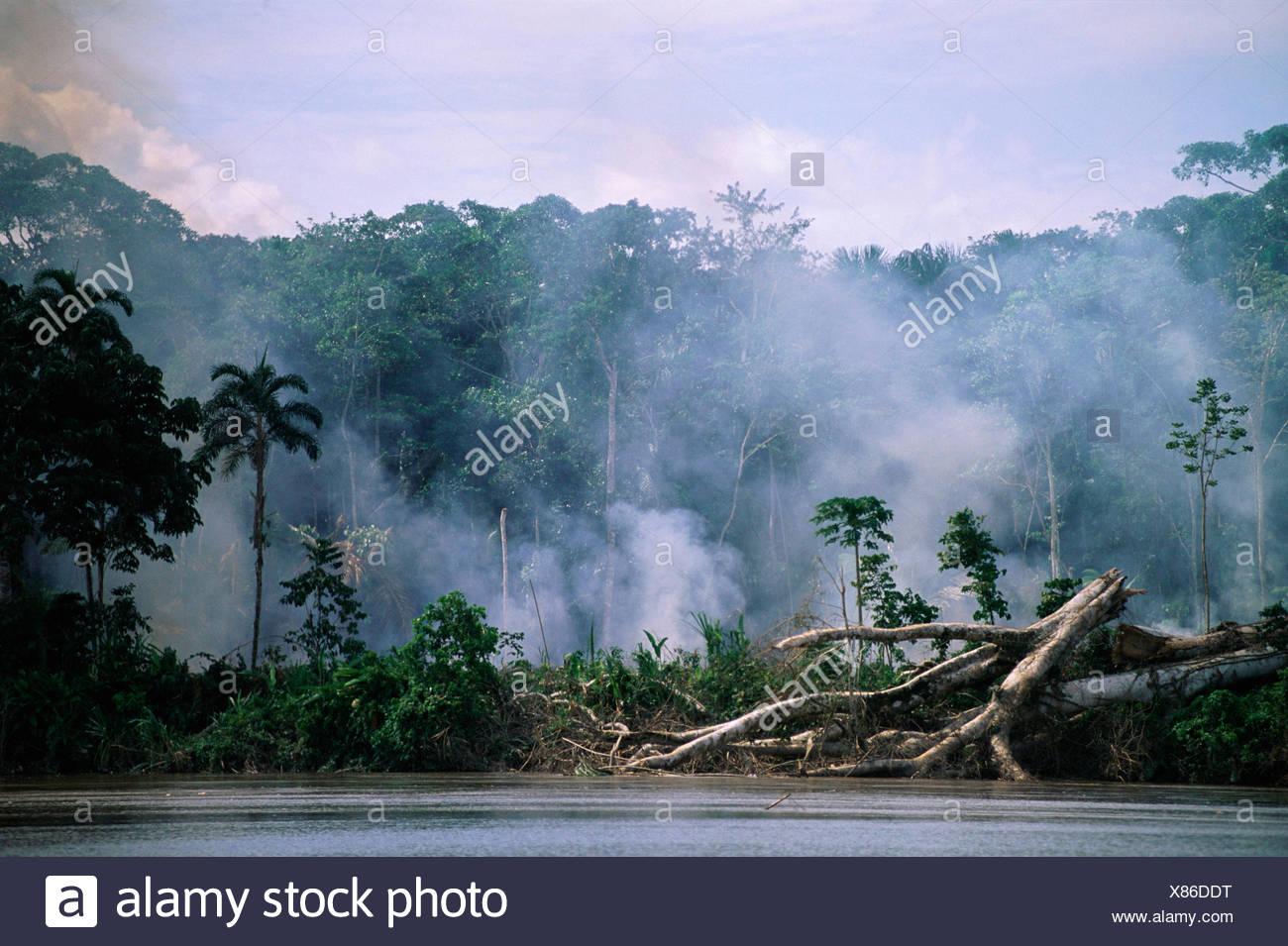 La deforestazione - il fumo degli incendi nella foresta amazzonica lungo la riva del fiume, Ecuador, Sud America Immagini Stock