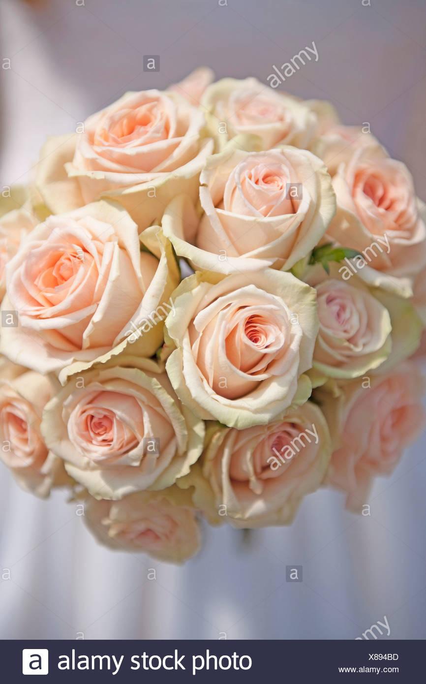 Germania, sposa azienda bouquet di rose Immagini Stock