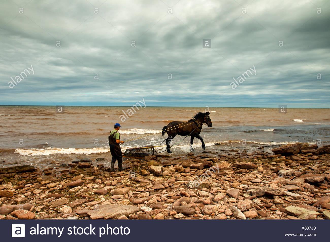 Irish Moss pescatore e Cavallo, Capo Nord, Prince Edward Island, Canada Immagini Stock