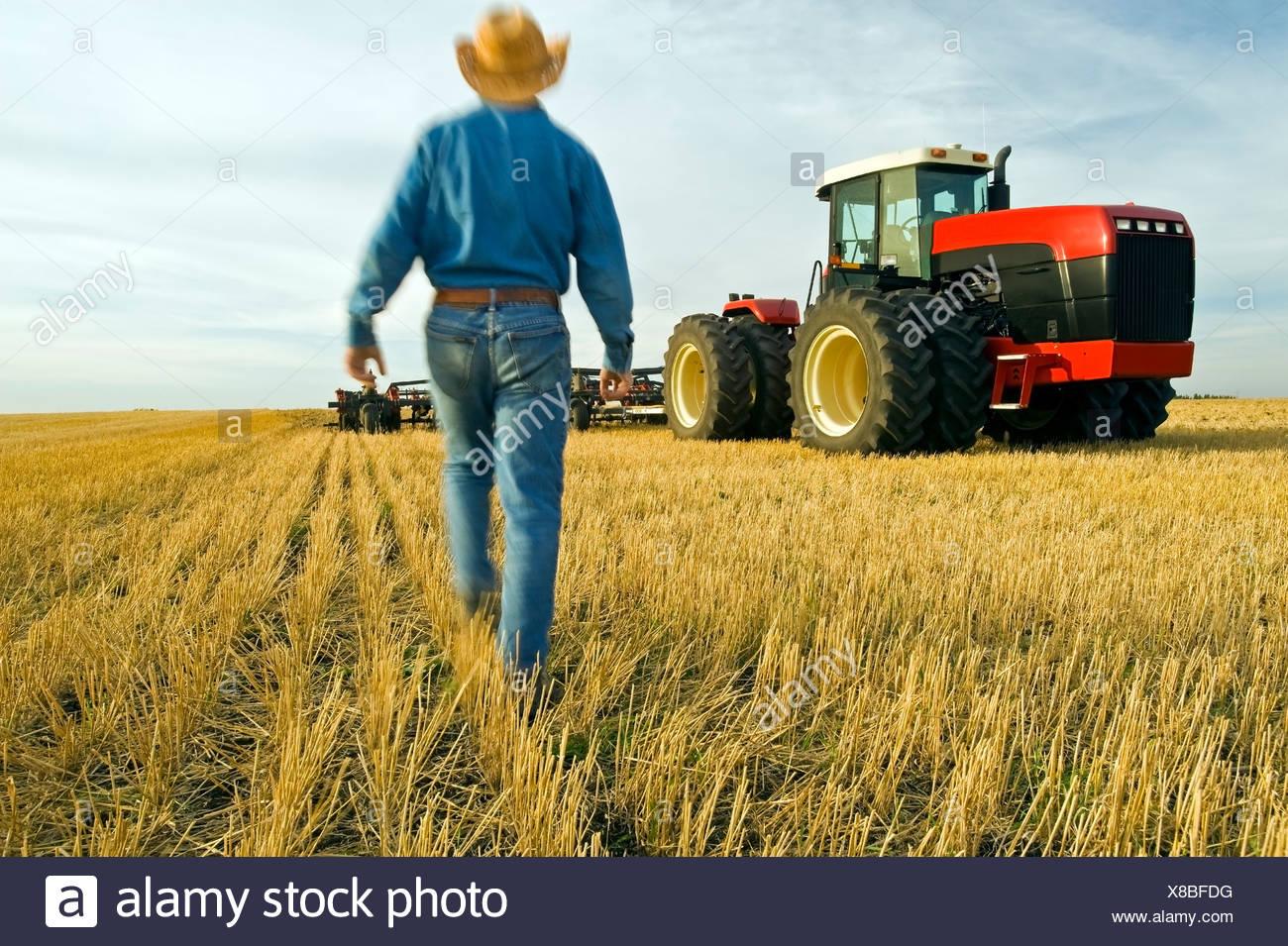 Coltivatore a piedi in un campo di stoppie di grano verso il suo trattore, Tiger colline, Manitoba, Canada Immagini Stock