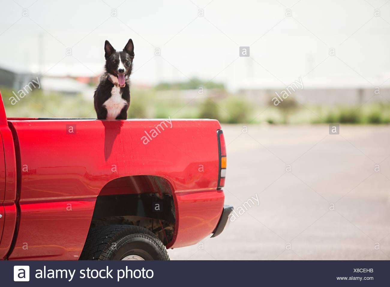 Cane in rosso carrello Immagini Stock