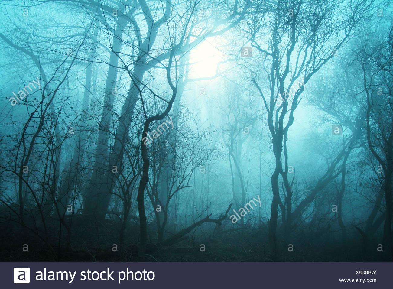 Alberi nella nebbia Immagini Stock