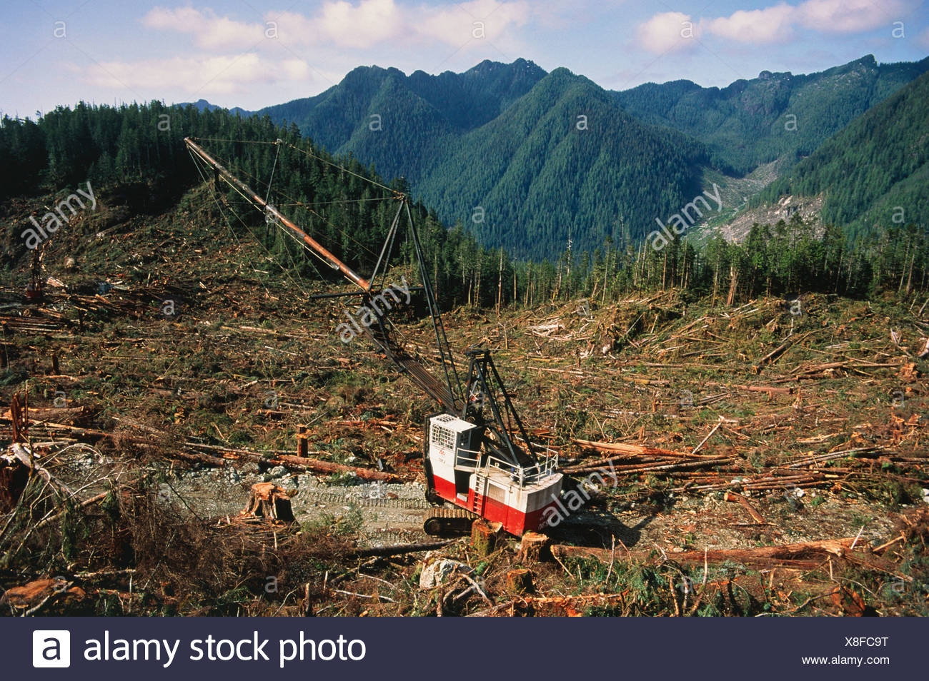 Deforestazione della foresta pluviale temperata Immagini Stock