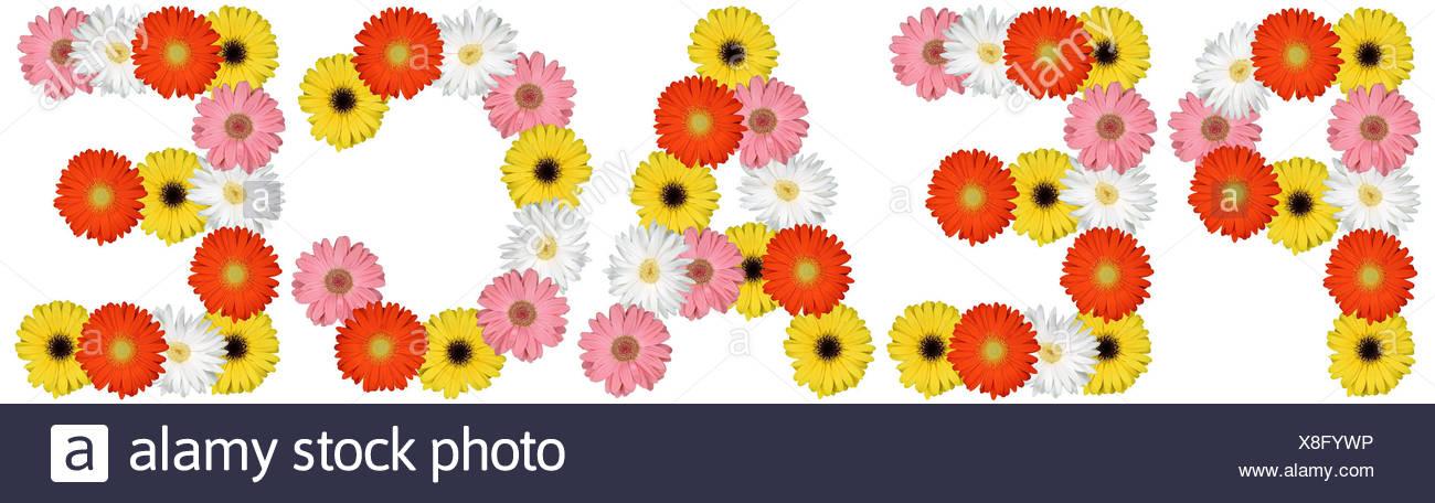 La pace la pace la pace della natura fiori tagliati su bianco Immagini Stock