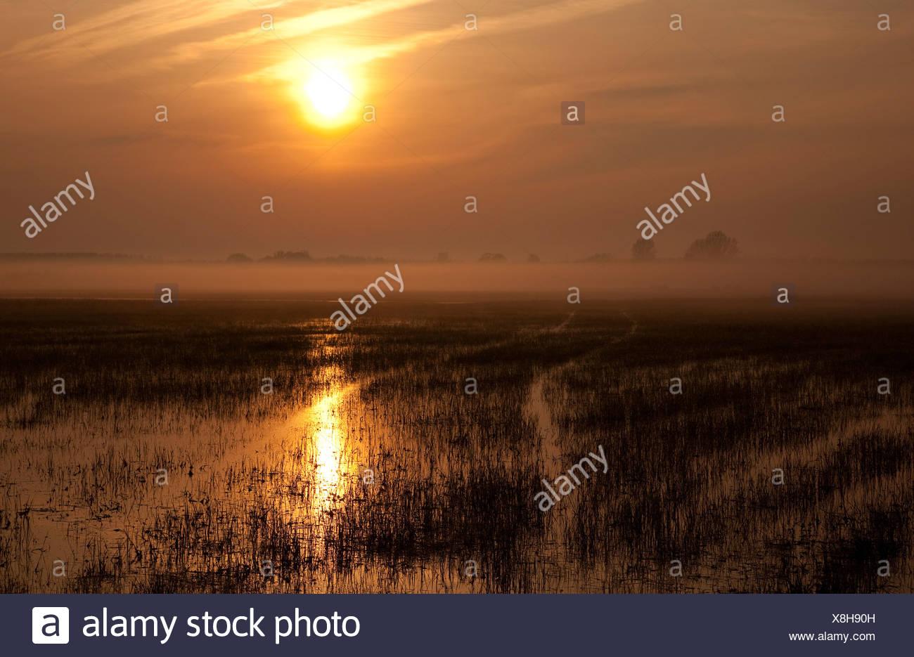 Le tracce in un campo inondato di sunrise, Neusiedlersee Nationalpark parco nazionale, Burgenland, Austria, Europa Foto Stock