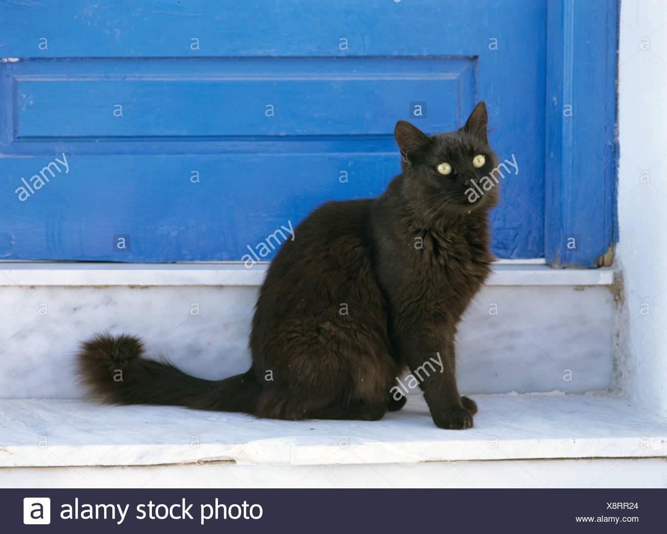 Il Gatto Domestico Il Gatto Di Casa Felis Silvestris F Catus