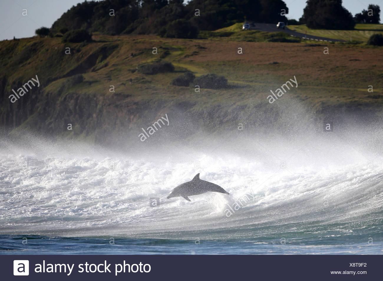 Dolphin saltando fuori dell'oceano Immagini Stock