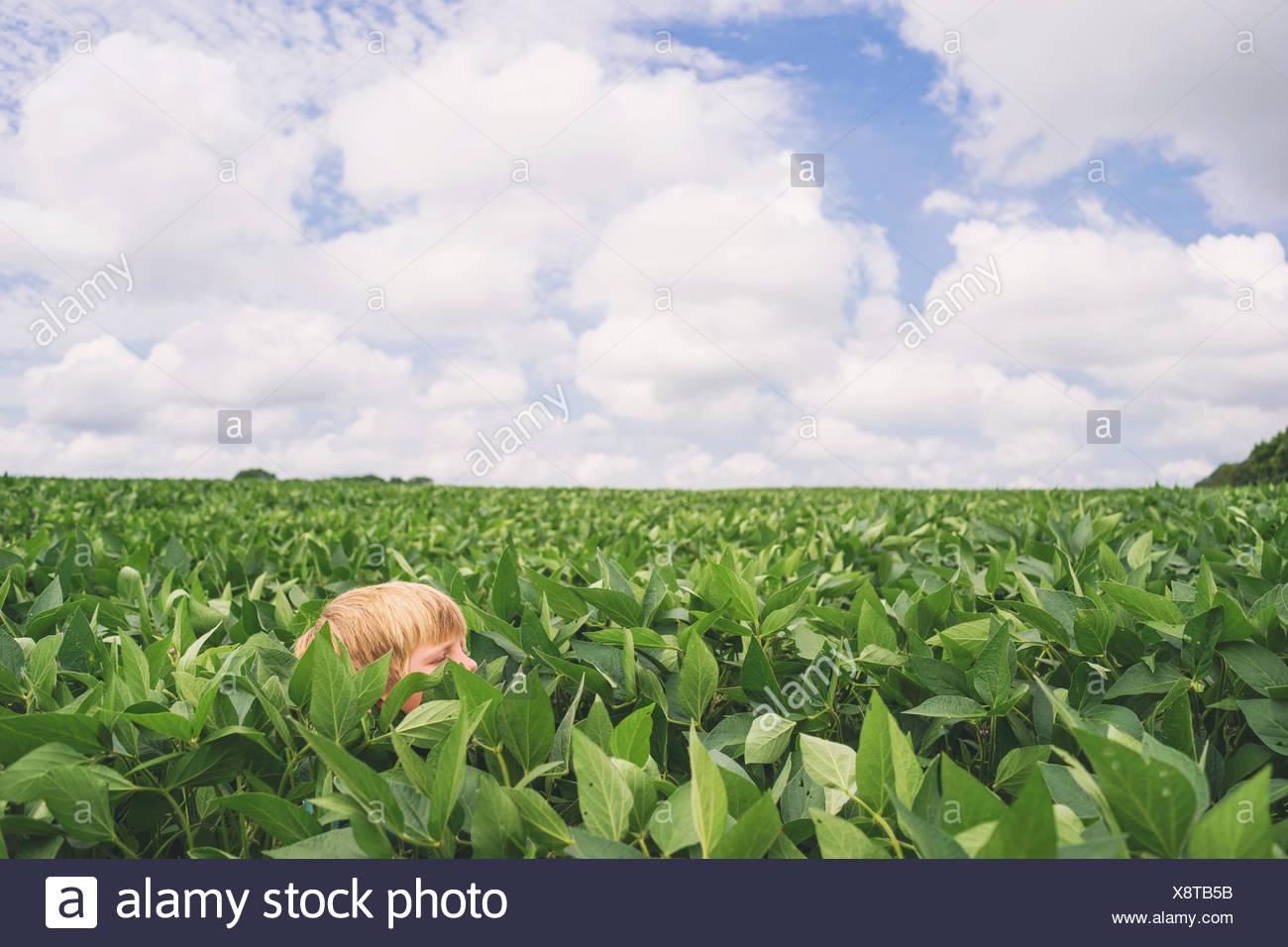 Ragazzo in testa in un campo di mais Immagini Stock