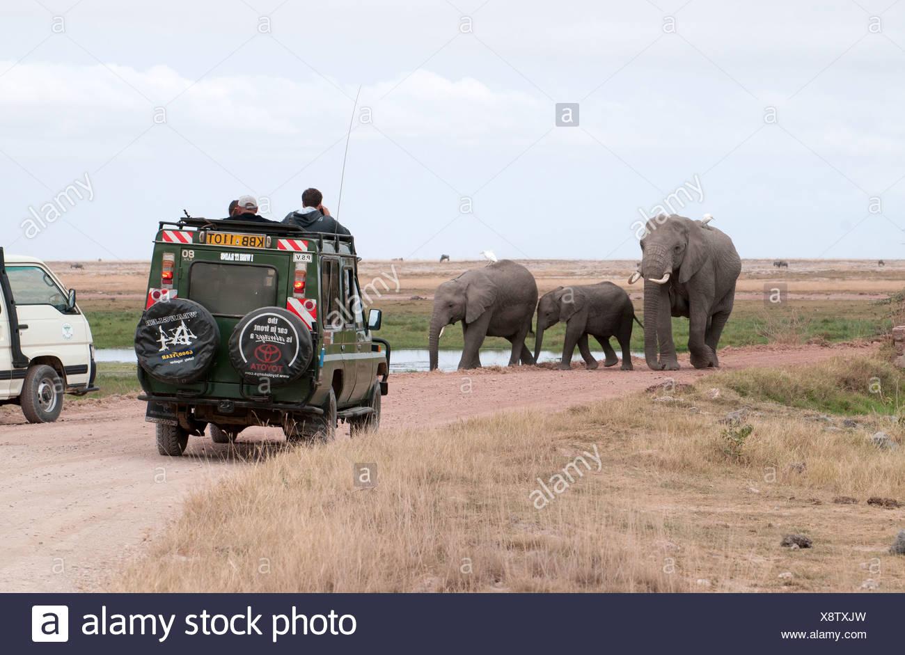 Famiglia di elefante camminando per strada verso la Toyota Landcruiser in Amboseli National Park in Kenya Africa orientale Foto Stock