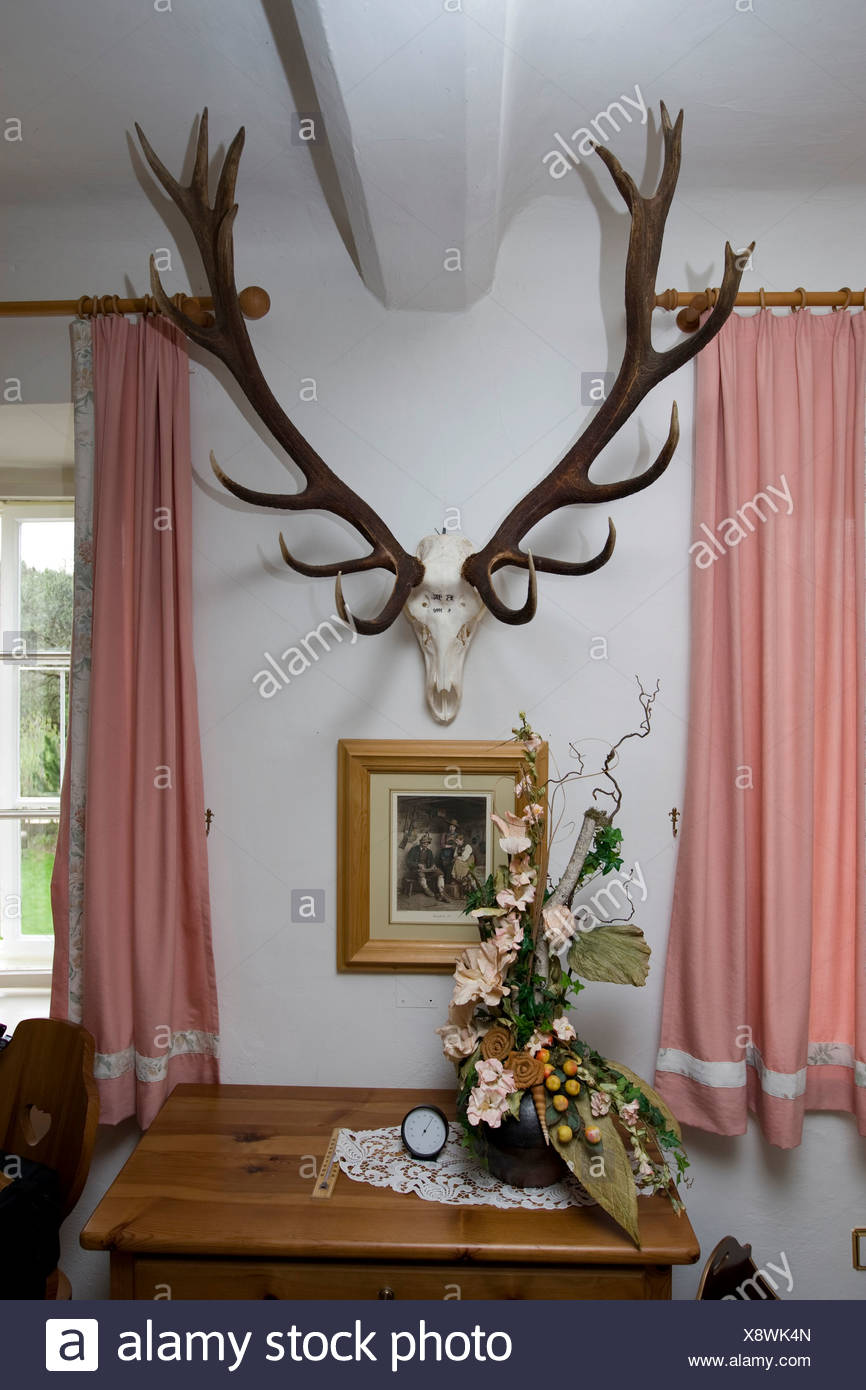 Trofeo di un cervo in una riserva di caccia, Stiria, Austria, Europa Foto  stock - Alamy
