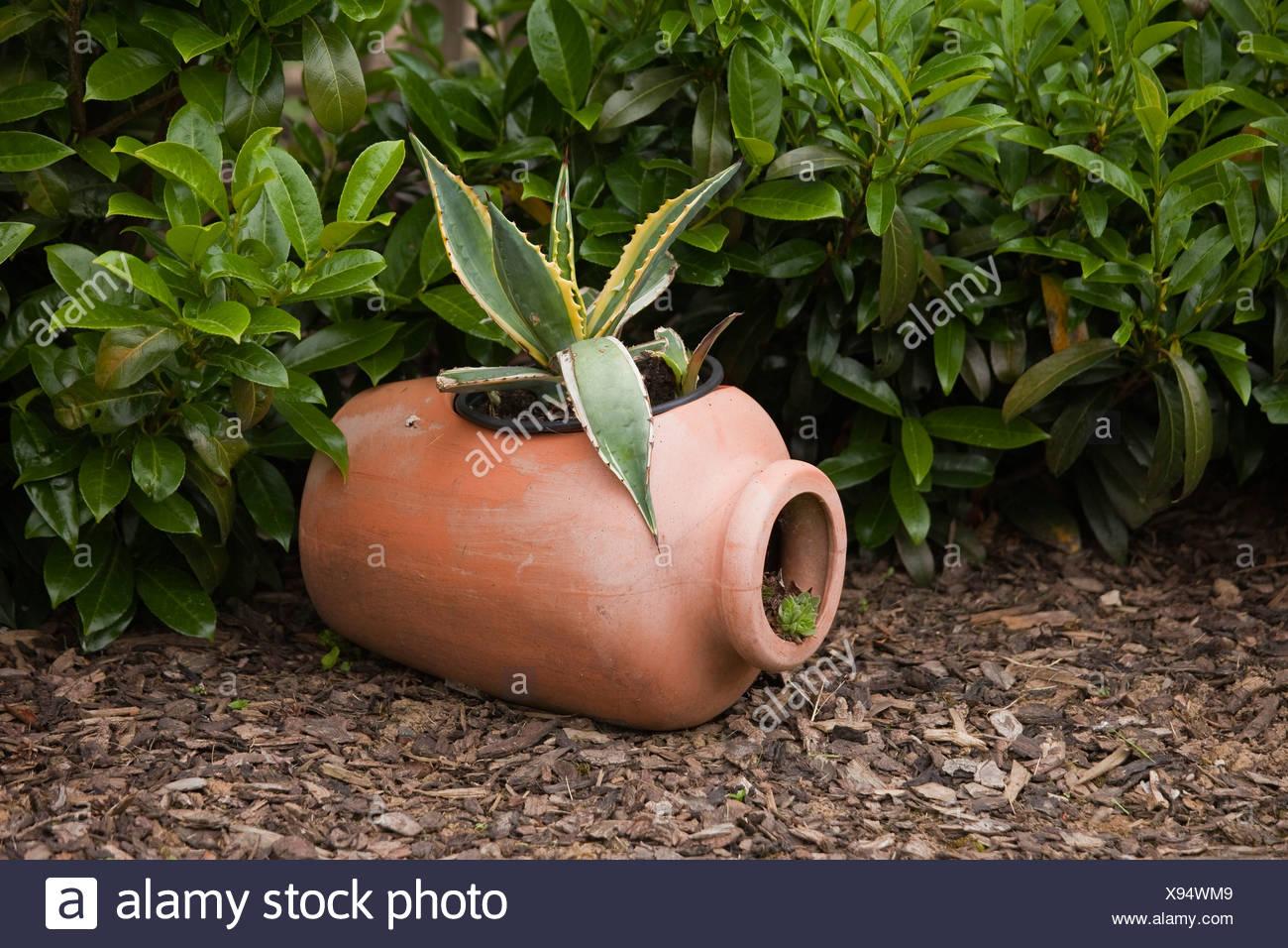 Anfore Con Fiori.Anfora Con Un Fiore Giardino Decorazione Foto Immagine