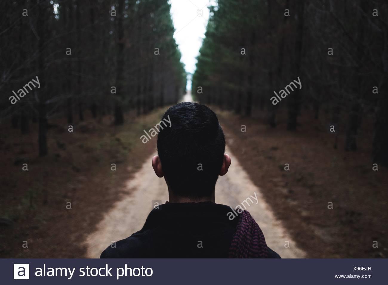 Escursionista Guardando Forest Immagini Stock