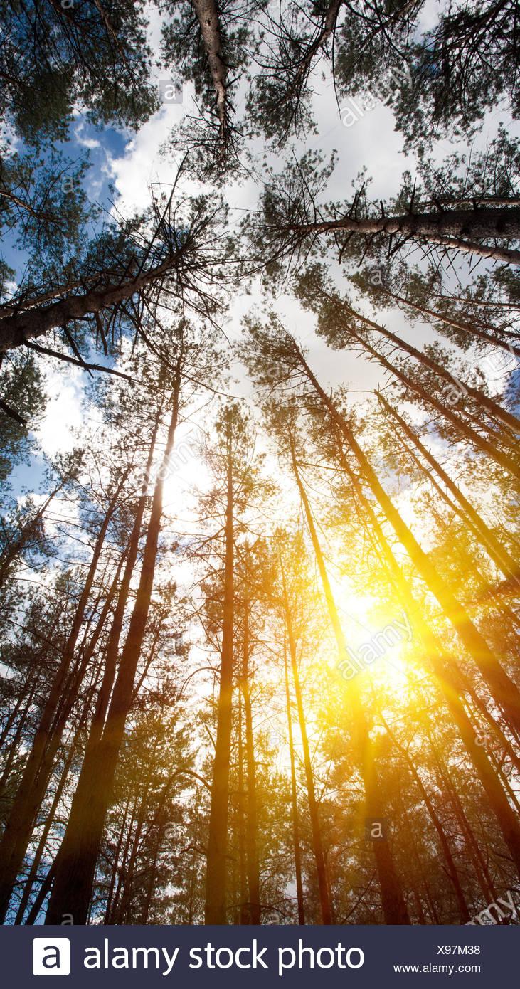 Cerca fino a boschi di corona. Gli sfondi naturali con un luminoso sole estivo sul blu del cielo. Immagini Stock