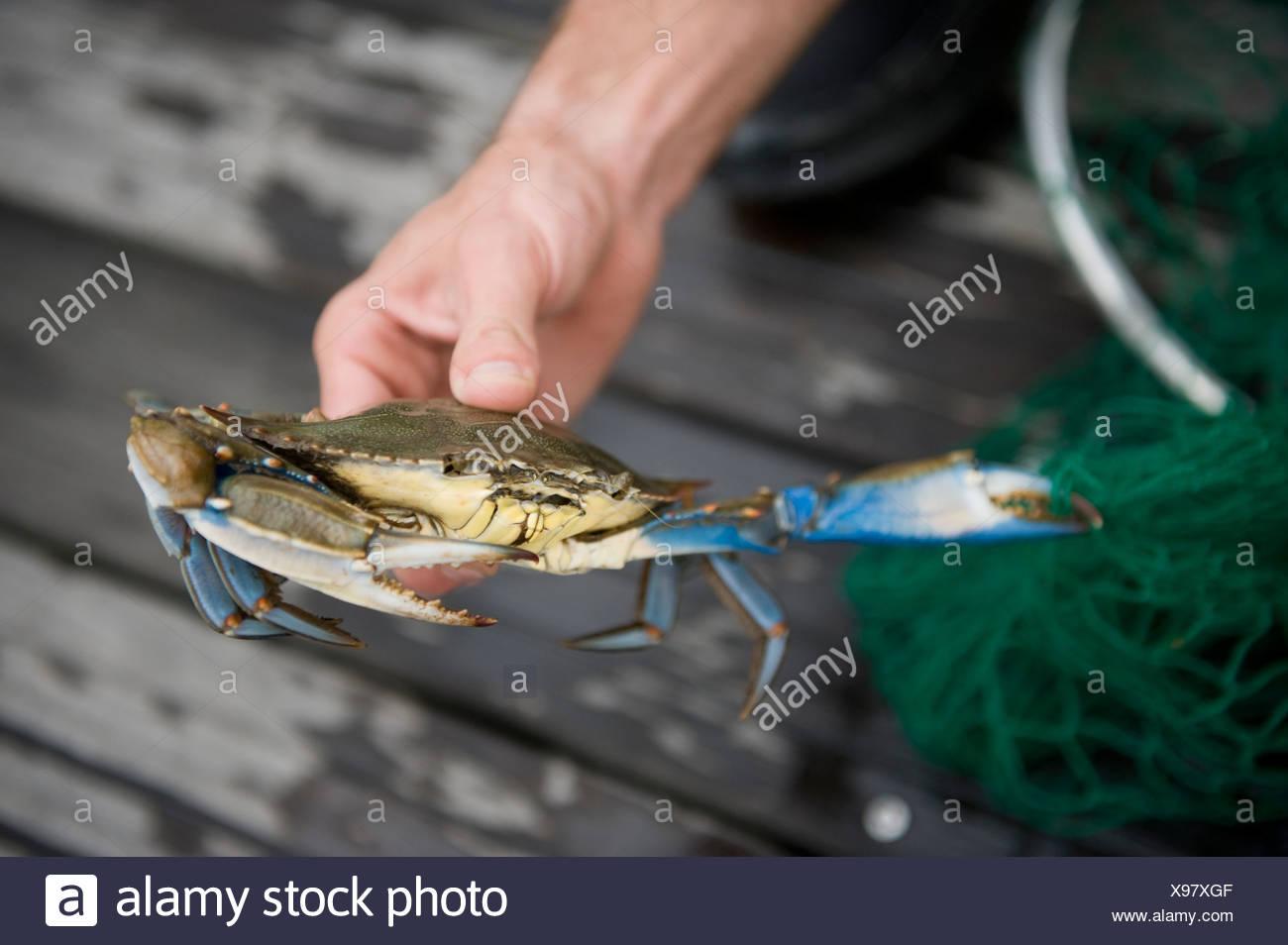 risalente a un pescatore granchiobuoni siti di incontri come POF