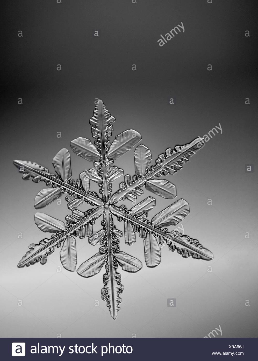 Foto-vista al microscopio di un fiocco di neve con una forma a stella Immagini Stock