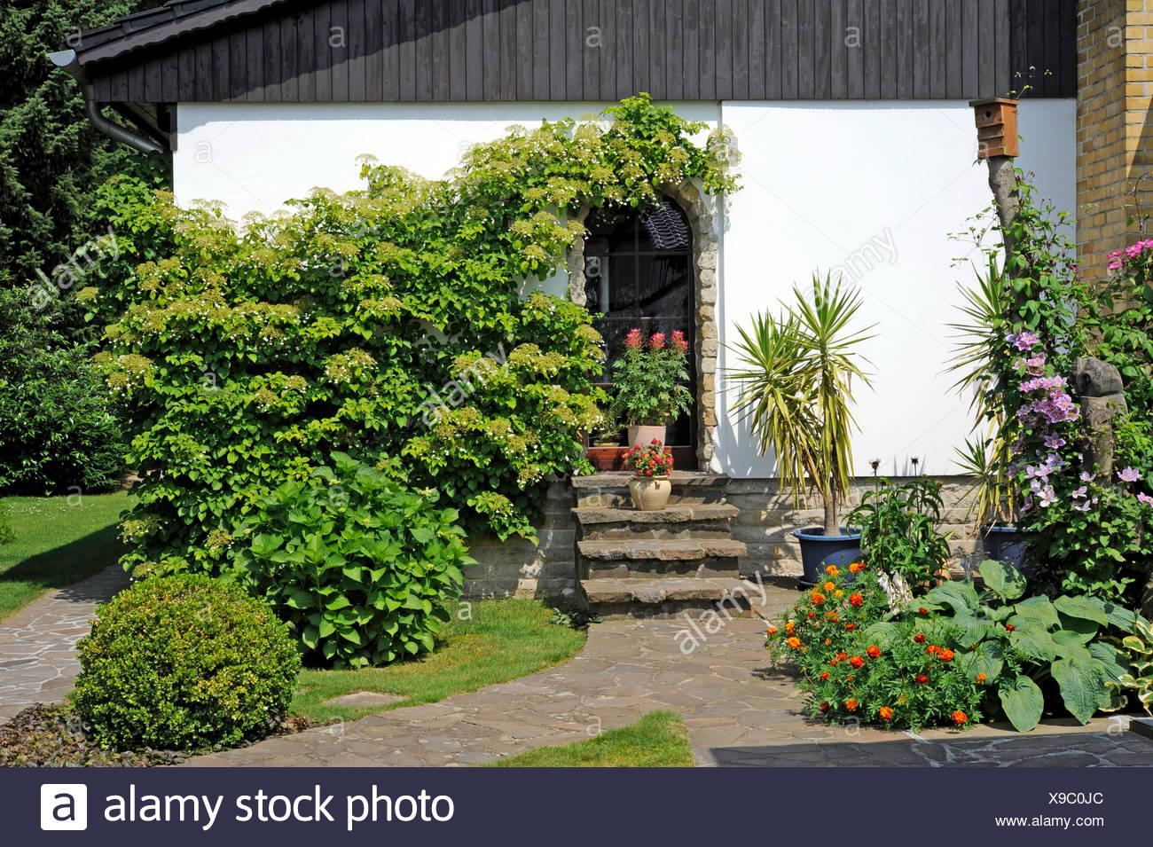 Giardino Di Una Casa giardino frontale di una casa di campagna, climbing