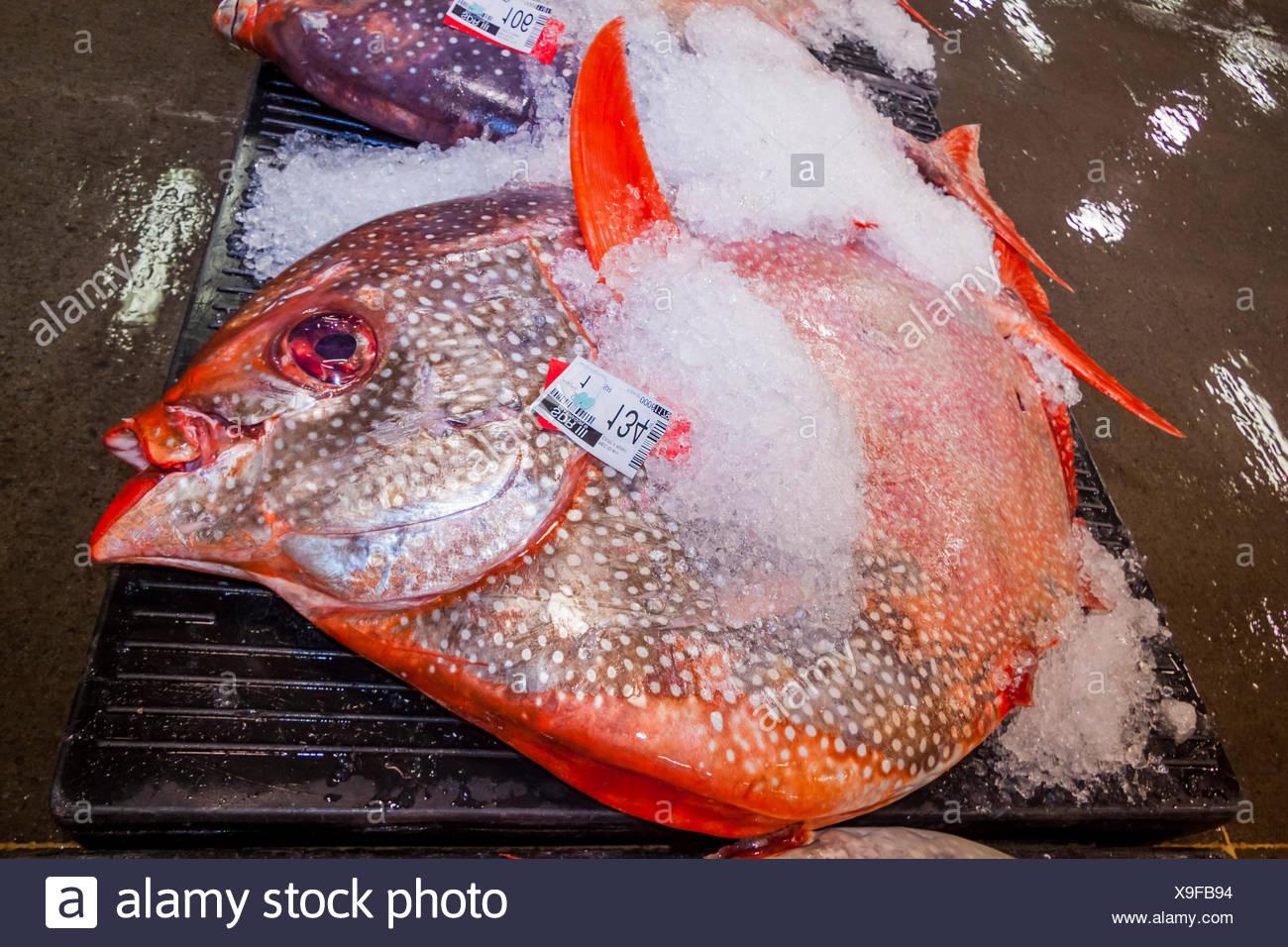 Moonfish all'asta del pesce, Lampris guttatus, Hawaii, STATI UNITI D'AMERICA Foto Stock