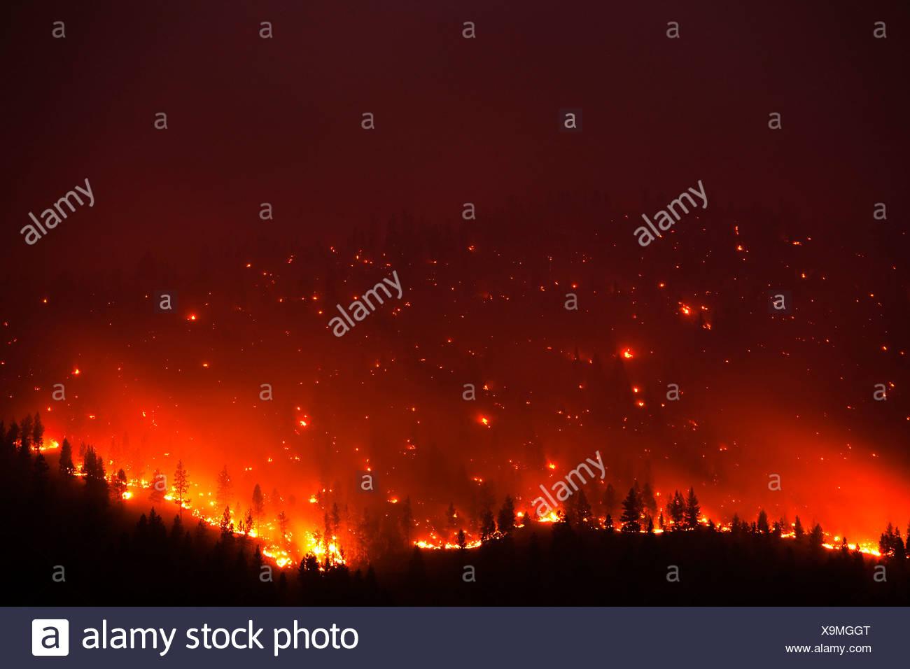 Un forrest fuoco sul fianco di una montagna in Montana. Immagini Stock