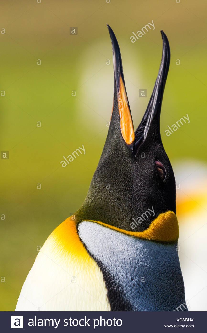 Animali uccelli Uccelli Immagini Stock