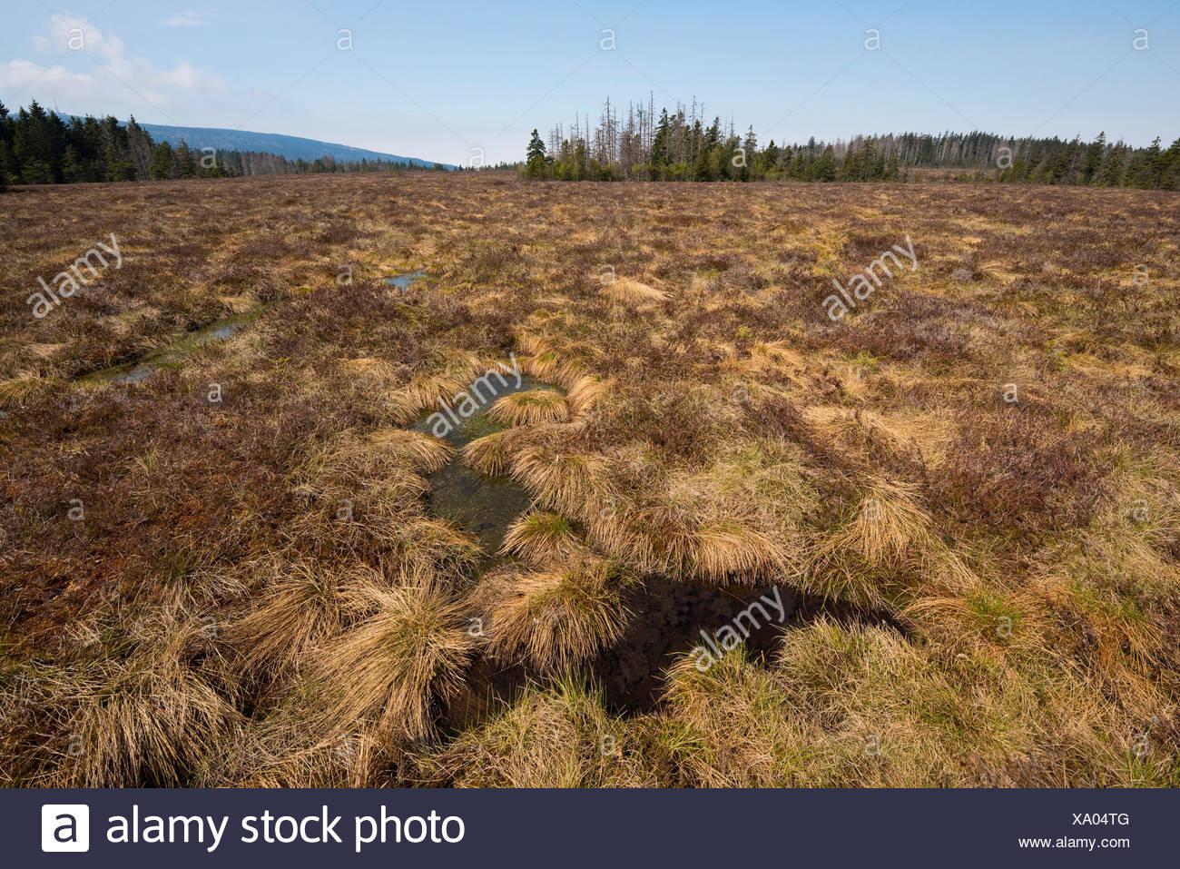 Großes Torfhausmoor, sollevato bog con sagomata a forma di clessidra curvatura, Harz, Bassa Sassonia, Germania Immagini Stock